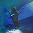 Dansing Shark  30x30